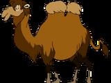 Milo the Wild Bactrian Camel