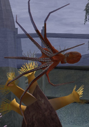 Octopus-wildlife-park-2