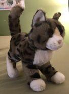 Tashette the Bengal Cat
