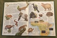 The Animal Atlas (15)