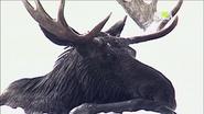 UTAUC Moose