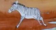 BTL Zebra