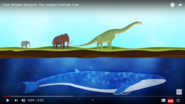 Elephants Mammoths Dinosaurs Whales