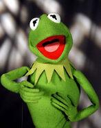 Froggy (2)