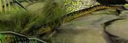 Green-anaconda-zootycoon3