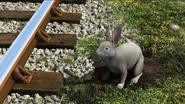TTTE Rabbit