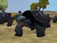 Zt2-galapagosgianttortoise