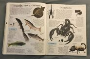 DK Encyclopedia Of Animals (144)