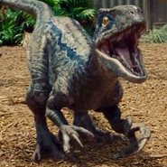 Jurassic World Blue
