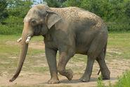 Photo-detail-asia-asian-elephants-3