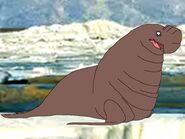 Rileys Adventures Southern Elephant Seal