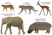 Serval Cheetah Gerenuk Elephant Hippopotamus