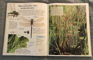 DK Encyclopedia Of Animals (72)