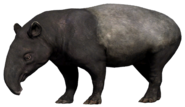 FC4 Animal (22)