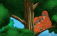 Go Diego Go Orangutangs