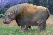 Hippopotamus switch zoo