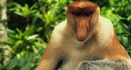 Life.of.Pi Proboscis Monkey