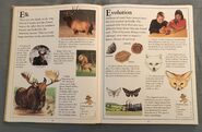 The Kingfisher First Animal Encyclopedia (26)