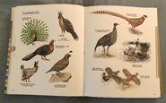 Visual Dictionary of Animals (73)