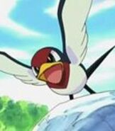 Ash's Taillow
