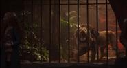 Dumbo 2019 Lion