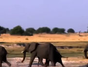 Jessie Elephants
