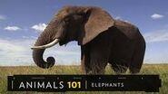 101 Elephants