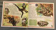 Animals of South America (3)