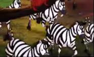 Animaniacs Zebras