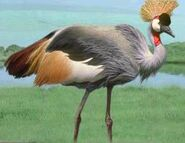 Crowned crane switch zoo