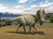 Dm centrosaurus
