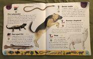 Pet Dictionary (8)