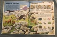Usborne World Wildlife- Mountain Wildlife (13)