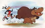 Hippos-in-baby-animals-from-disney-discovery-series