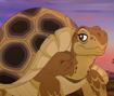 Spurred Tortoise TLG