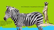 Suricatabob suricattapants annoyes mr. zebraward stripickles