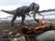 A Dead Octopus