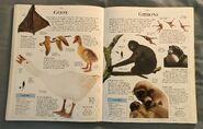 DK Encyclopedia Of Animals (82)