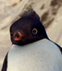 Raul in Happy Feet