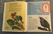 The Dictionary of Ordinary Extraordinary Animals (41)