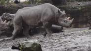 Oregon Zoo Rhino