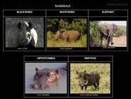 Warthog Rhino Hippo Elephant