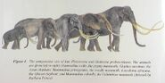 Mammothsized Mammals