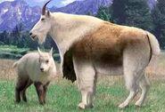Mountain goat switch zoo