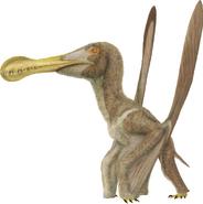 Ornithocheirus simus