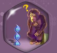 What monkey