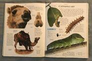 DK Encyclopedia Of Animals (53)