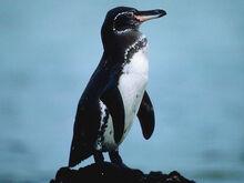 G-penguin img01-l