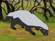 Rileys Adventures Cape Honey Badger
