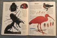 DK Encyclopedia Of Animals (47)